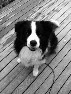 Kris's dog Sky.