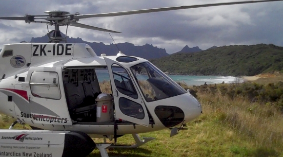 Helicopter landed on Codfish Island. Photo: Kurt Sharpe.