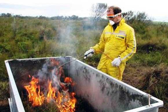Controlled burn of Corybas carsai habitat in 2010.