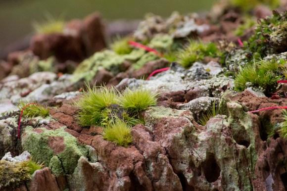 Subantarctic plantlife. Photo: Su Yin Khoo   CC BY-NC-SA 2.0.