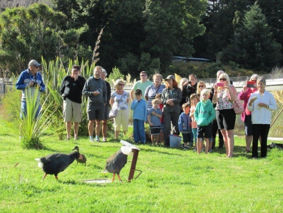 The crowds at Te Anau Wildlife Park watching the takahē and duck.
