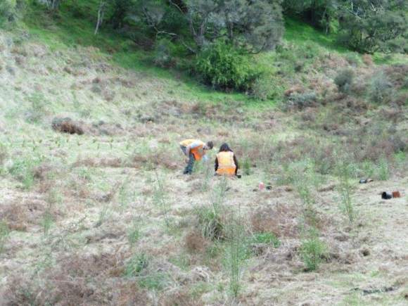Planting seedlings on the side of a hill.