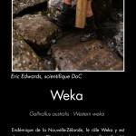 Weka. Photo copyright Sabine Bernert.