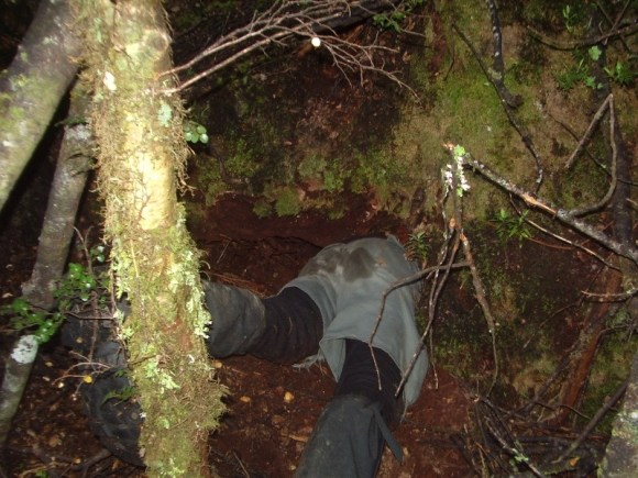 Robin entering a kiwi burrow to collect a kiwi for a health check and transmitter change.