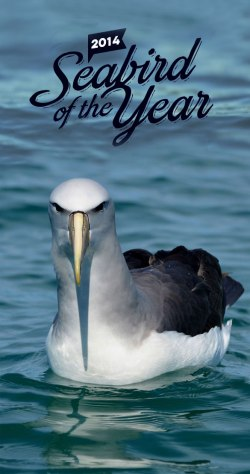 Salvin's albatross for Bird of the Year!