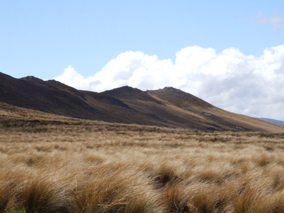 Spotting Kaimanawa horses in the wild landscape of the Waiouru army training area.