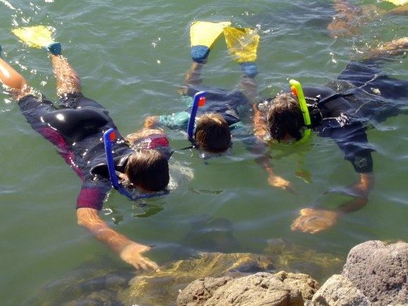 Children snorkelling, Pilot Bay, Mount Maunganui. Photo: S.Twaddle.
