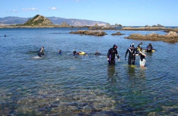Snorkelers enjoying Taputeranga Marine Reserve.