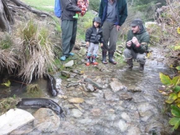 Feeding eels on Arapawa Island.