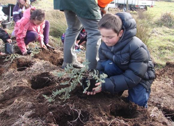 Student planting pinatoro for the Notoreas moth on the Taranaki coast.