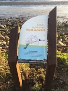 Royal spoonbill sign.