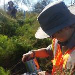 Measuring at Whangamarino Wetland.