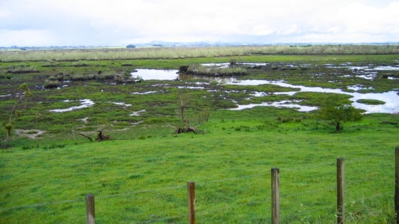 Whangamarino Wetland. Photo: Ron Knight | CC BY 2.0.