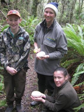 Kiwi egg lift success.