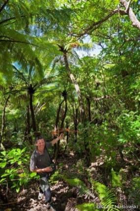 Tracey tracking rowi kiwi through the forest on Motuara. Photo: Grant Maslowski.