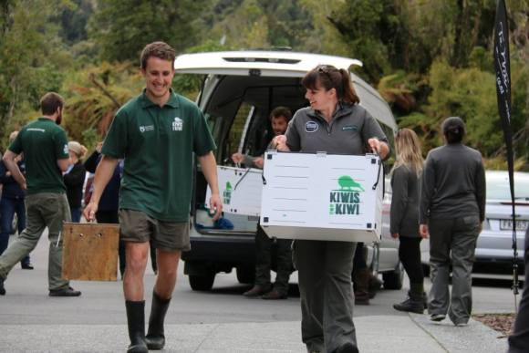 Nicola Toki and Franz Josef DOC Ranger Heath Sinclair transferring rowi. Photo: Katrina Henderson.