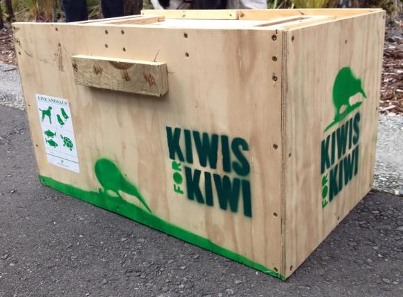 Kiwi transport box. Photo: Katrina Henderson.
