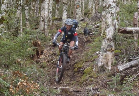 Mountain biker descending through Beech Forest.