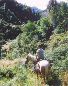 Shane's dad on horseback in Te Urewera.