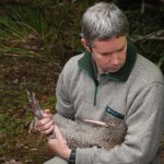 Chris Golding, Motueka Operations Manager, holding a great spotted kiwi/roroa.