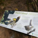 New hihi panel on Kapiti Island.