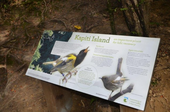 New information panel on hihi recovery on Kapiti Island.