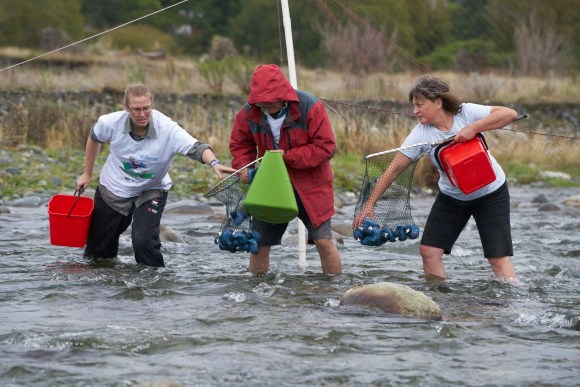 DOC staff and volunteers brave icy waters to retrieve the racing ducks.