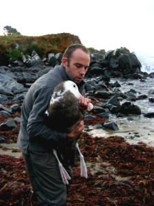 Paul releasing a juvenile wandering albatross, Bluff.