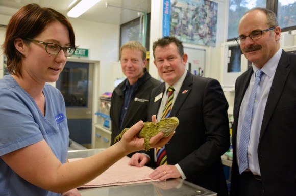 DOC's Acting Area Manager for Manawatū, Andrew Mercer, Palmerston North Mayor, Grant Smith, and DOC's Director-General, Lou Sanson with a tuatara patient at Wildbase Hospital.