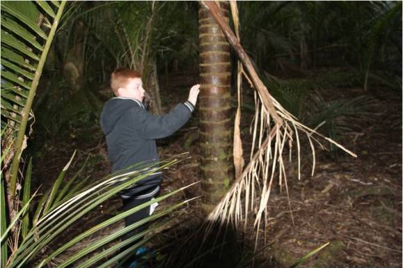 hunter-nikau