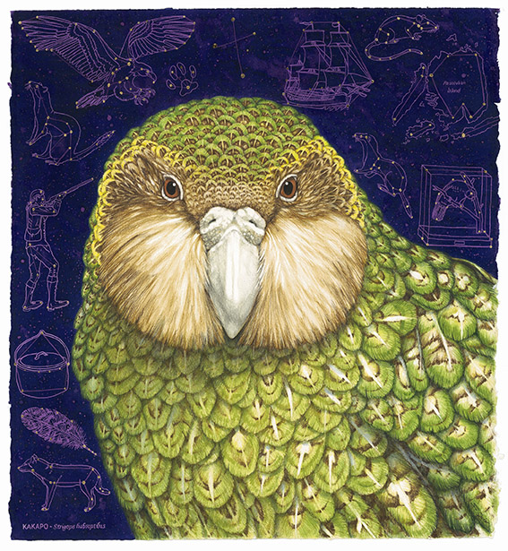Jo Ogier, Kākāpō – Strigops habroptilus (2016). Watercolour, coloured pencil and gold leaf.