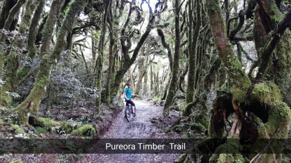 A Snapchat from the Pureora Timber Trail with Lou's daughter Georgia.