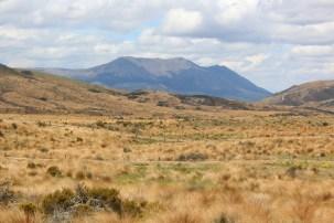 Burwood Takahē Centre landscape. Photo: DOC