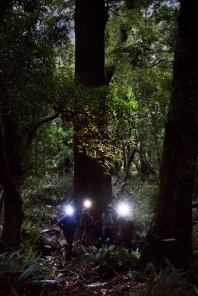 Bat monitoring in Whirinaki. Photo: Neil Hutton