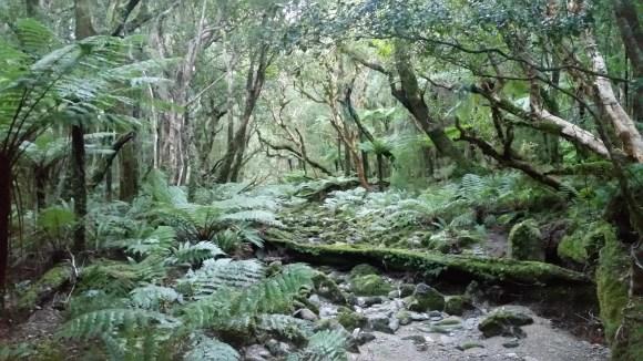 Temperate rainforest, Resolution Island.