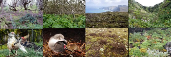 Auckland Island now, and what it should look like. Prey switching behaviour as seen in mice on other islands where they are the sole predator is also a real concern. 📷: S. Horn, F. Cox, P. Sagar, B. Dilley, J. Ross and J. Ware