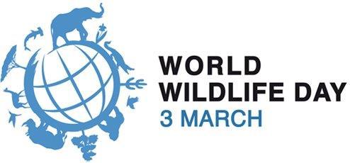 wwd image 1 logo.jpg