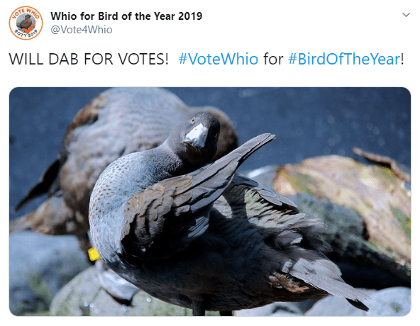 The best memes of Bird of the Year 2019