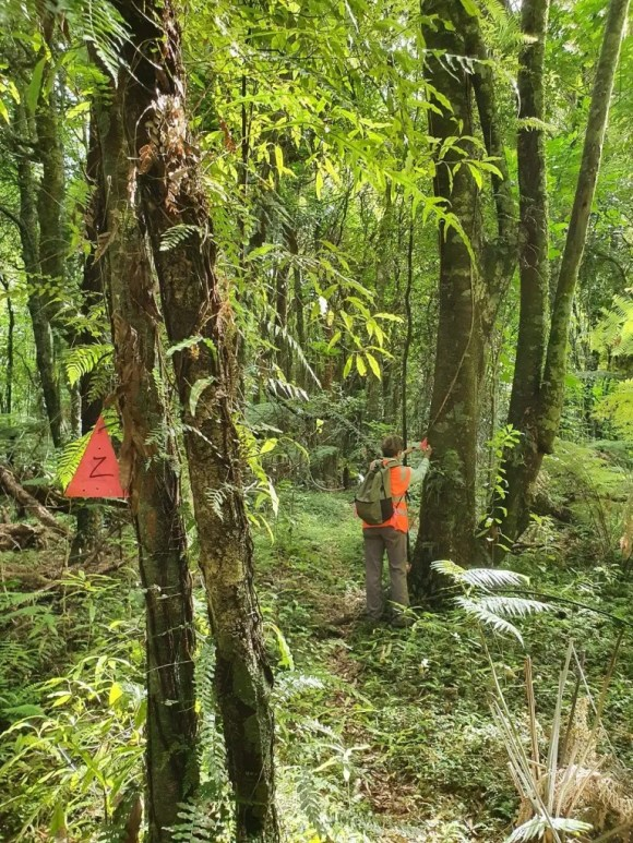 """Volunteer Valerie updating the markers on the """"Z"""" trap line in Rotoehu Ecological Forest"""
