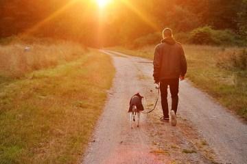 Et privat hundehotell og hundebarnehage i hele Norge