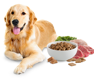 What to Feed your Adorable Dog!
