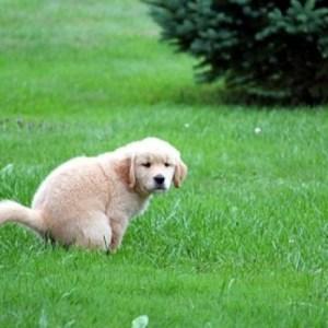 Dog Potty Training Basics