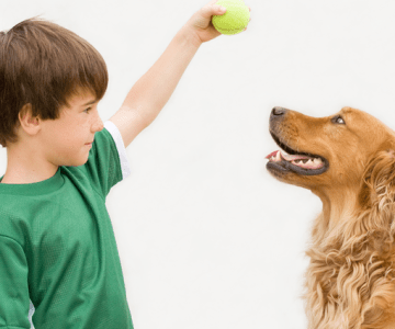 Dog Training for Provision of a Meaningful Life