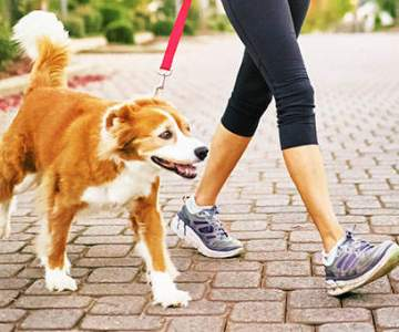 Can one make money with the help of a dog walking app?