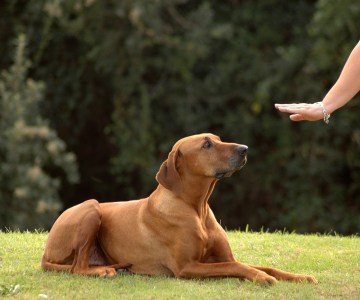 Great Reasons to become a Dog-Sitter