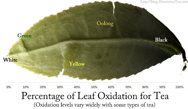 Graphic scale of tea oxidation by tea type.
