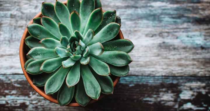 'Planten zijn goed voor je': Feit of fictie?