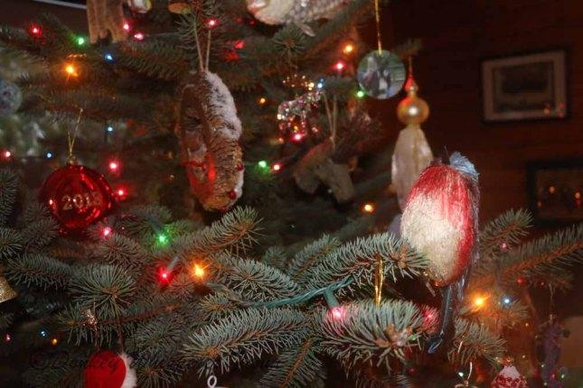 Christmasbluespruce2013