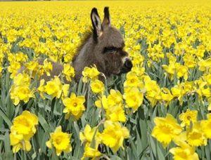 donkeyspring