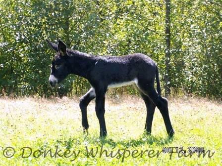 rio baby donkey